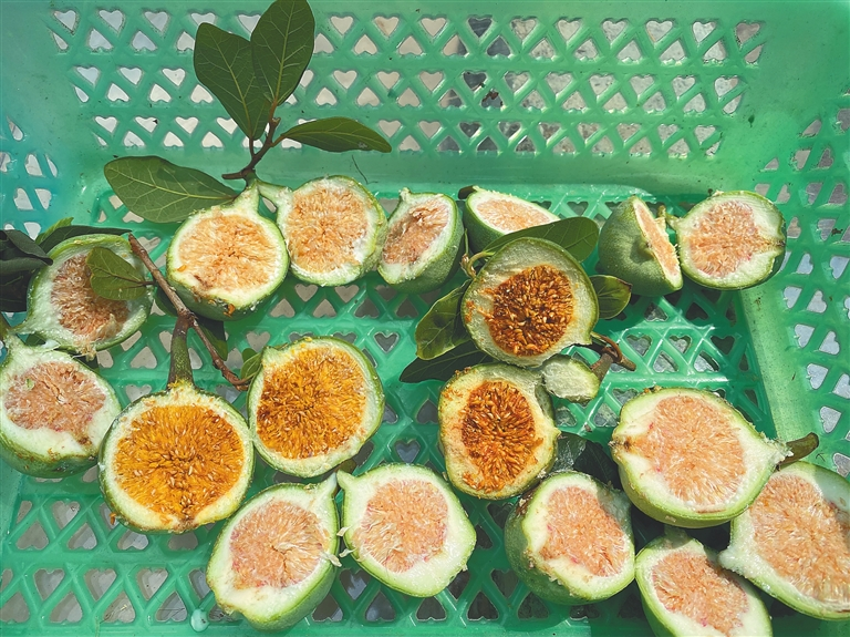 海南民间传统小吃薜荔凉粉:来自树上的果冻