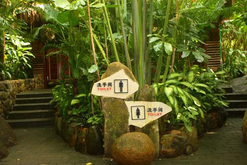 门前植物配置手绘图