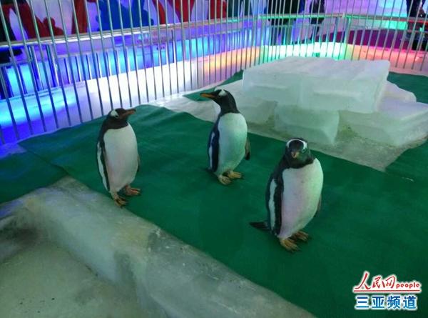 哈尔滨冰雕艺术展三亚开展 4企鹅同时亮相
