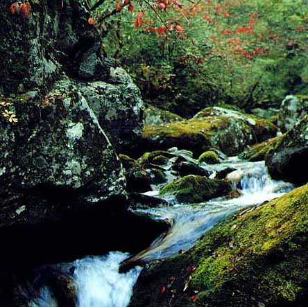 黑龙潭偏岩子保护站,走进丛林中的绝尘净土,观赏郁郁诗意的红叶谷