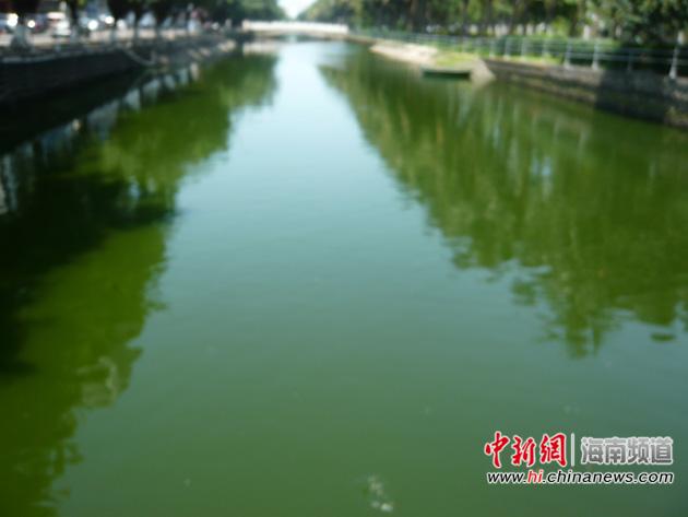 玉河呈现墨绿色