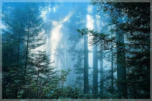 海南 国家级自然保护区 五指山/海南五指山国家级自然保护区